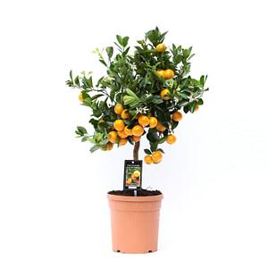 flora 5ef373816effc