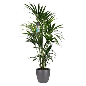 flora 5f510cc276179 1