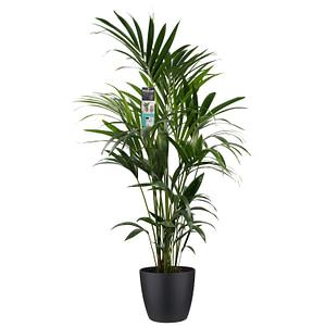 flora 5f512d6187fc6 1