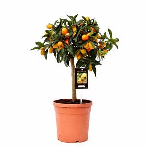 flora 5ef373838f679