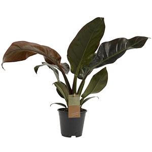 flora 5f522a0ebae85