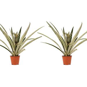 flora 5fd6901bec885