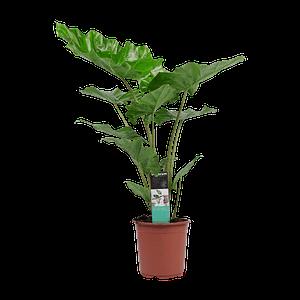 flora 601e6c4cb5ddb