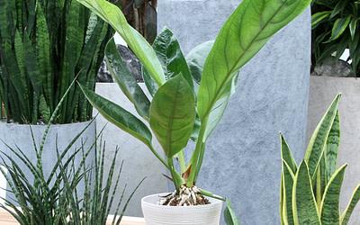 Planten in binnenpot