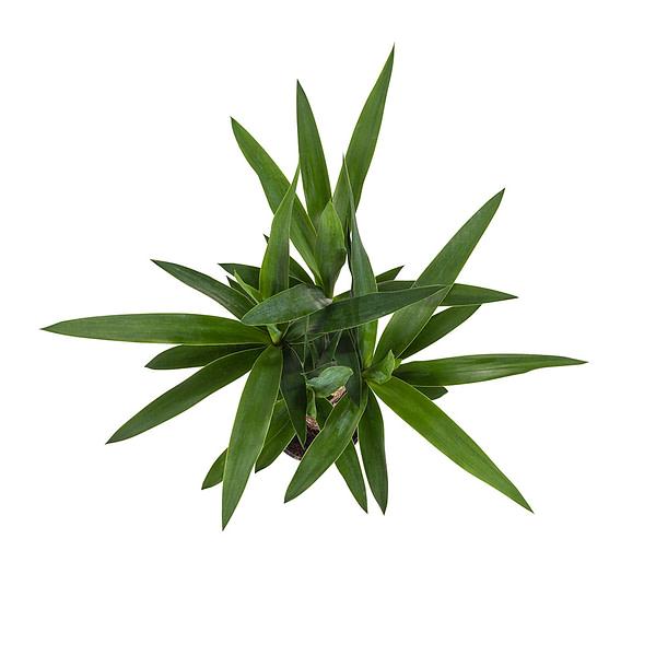 flora 5ef36be358bc9