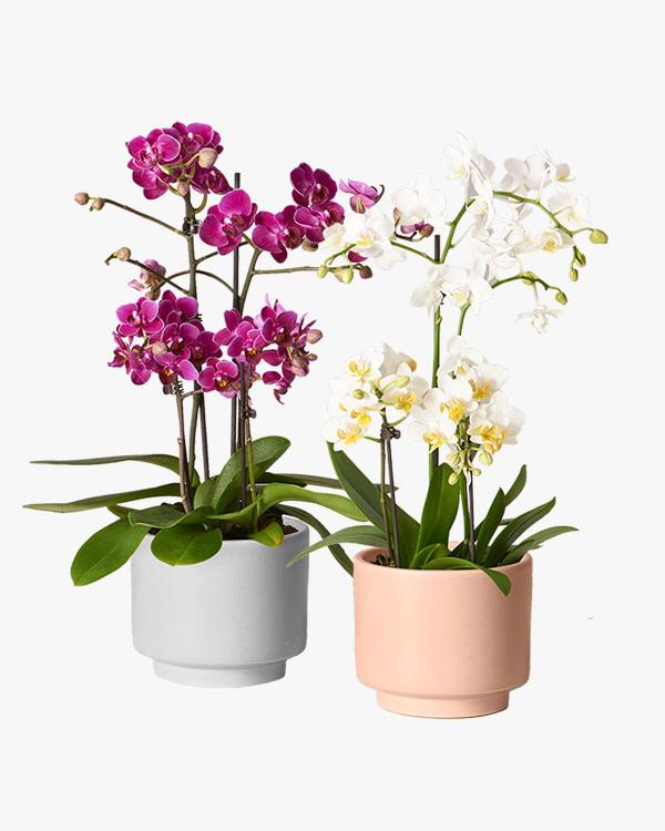 bloeiende planten mobiel categorie