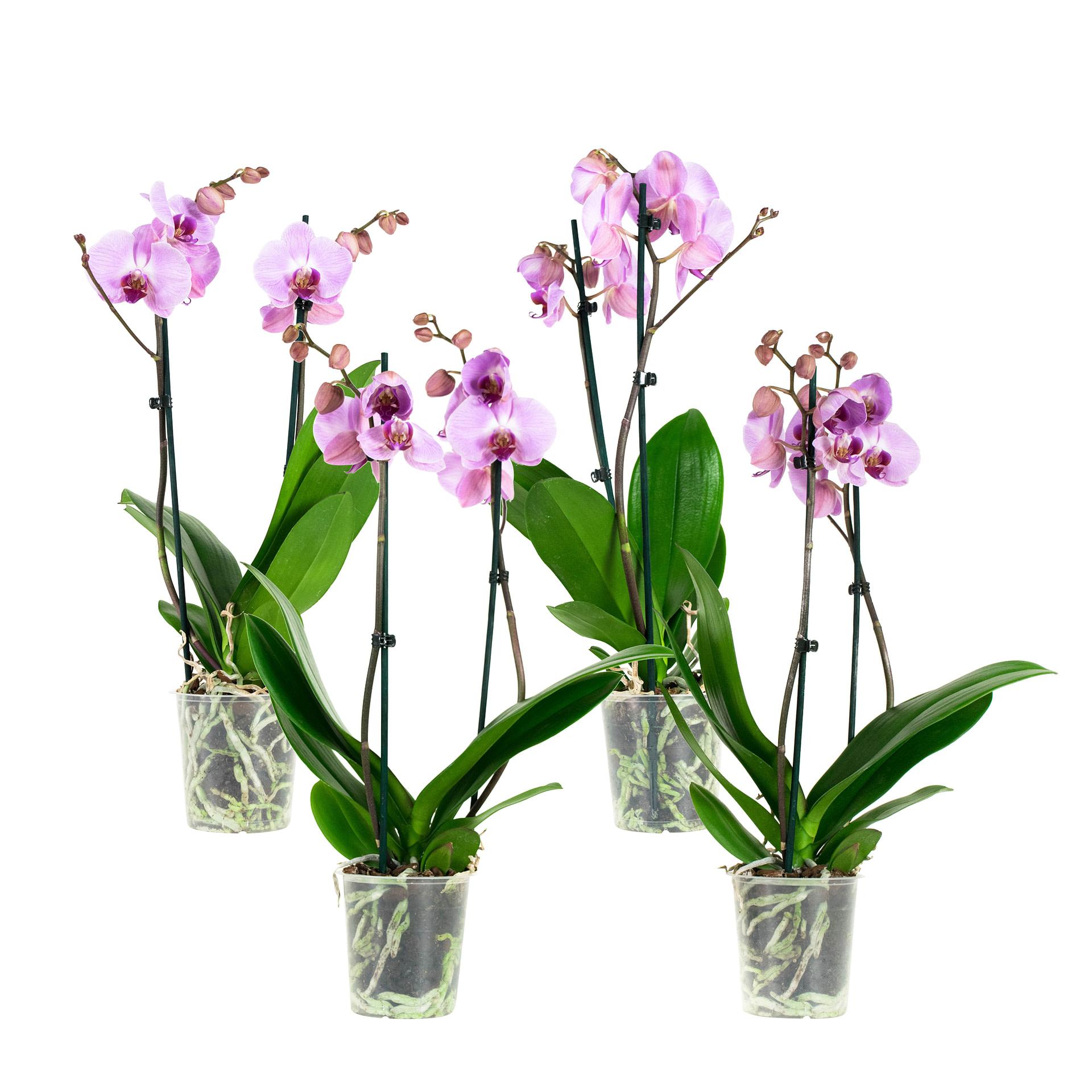 flora 5ef374f22fbea